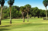 Image of Cleveland Heights Golf Course Lakeland, FL